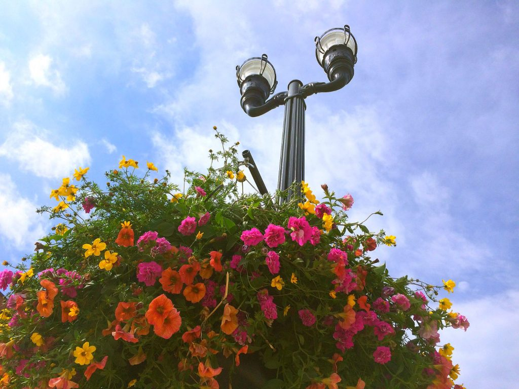 Flower Baskets Alexandria Mn