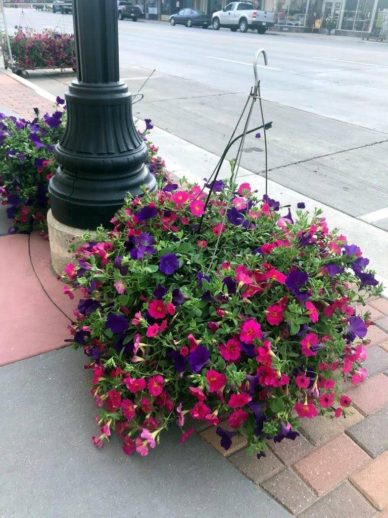 Flower Baskets Downtown Alexandria 2018